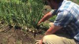 Mahaffey Farms In theNews