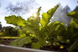 Naturally Grown Produce